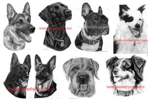 Dog pencil drawings